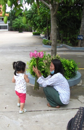 Baby Naly and the lotus offering - Wat Champuh Ka'ek, Kandal