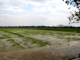 Looking at the fielded landscape, opposite the front of a family's stupa memorial site - Takeo