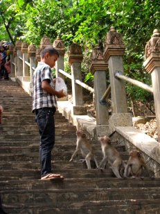 Roat feeds the monkeys hanging around the stairway entrance of the mountain shrine - Phnom Oudong, Kandal