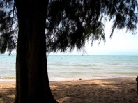 I find it odd to be sitting underneath an evergreen sort of tree on a beach in Cambodia, but I'll take it - Koh Tonsai, Kep