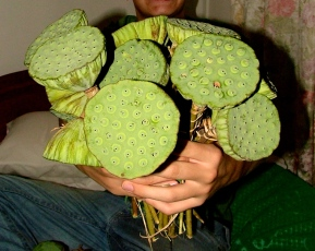 The bouquet of lotus seed pods that greeted me back in 2008 - Golden Gate Hotel, Phnom Penh
