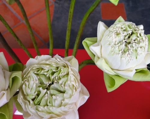 Vase of lotus so gracefully arranged - Les Temps des Cerises, Phnom Penh