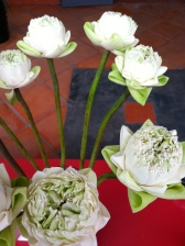 Vase of lotus so gracefully arranged - Les Temps des Cerises, Phnom Penh